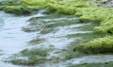 Alghe: Rimozione e Smaltimento Alghe